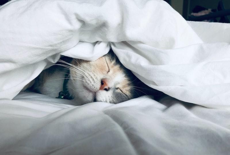 Schlafstörungen - 7 Tipps für erholsamen Schlaf